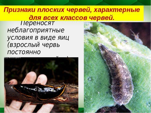 Переносят неблагоприятные условия в виде яиц (взрослый червь постоянно откла...