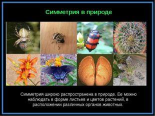 Симметрия в природе Симметрия широко распространена в природе. Ее можно наблю