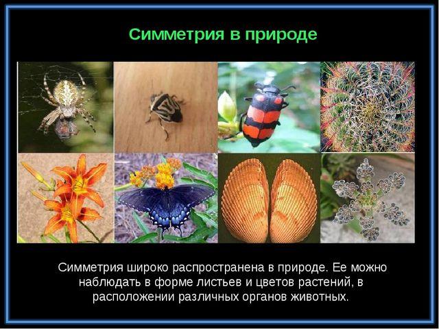Симметрия в природе Симметрия широко распространена в природе. Ее можно наблю...