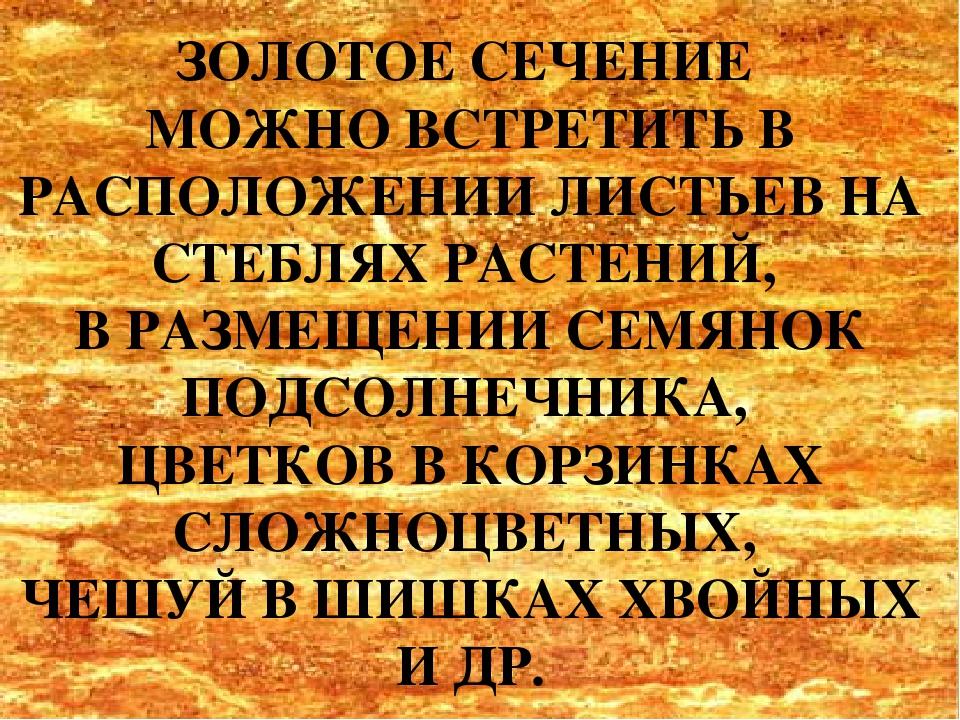 ЗОЛОТОЕ СЕЧЕНИЕ МОЖНО ВСТРЕТИТЬ В РАСПОЛОЖЕНИИ ЛИСТЬЕВ НА СТЕБЛЯХ РАСТЕНИЙ, В...