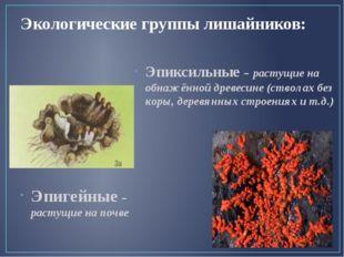 Экологические группы лишайников: Эпигейные – растущие на почве Эпиксильные –