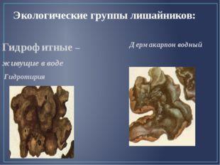Экологические группы лишайников: Дермакарпон водный Гидрофитные – живущие в в