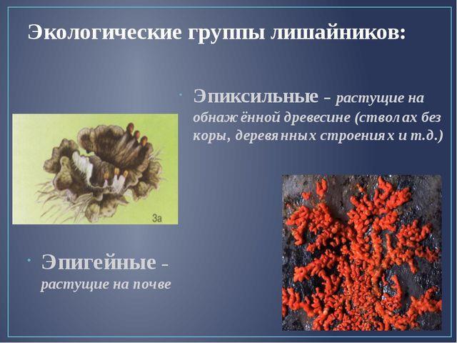 Экологические группы лишайников: Эпигейные – растущие на почве Эпиксильные –...