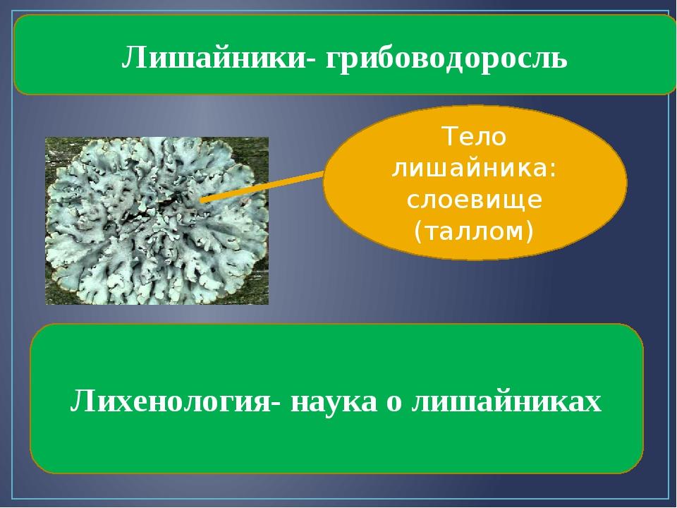 Лишайники- грибоводоросль Тело лишайника: слоевище (таллом) Лихенология- наук...