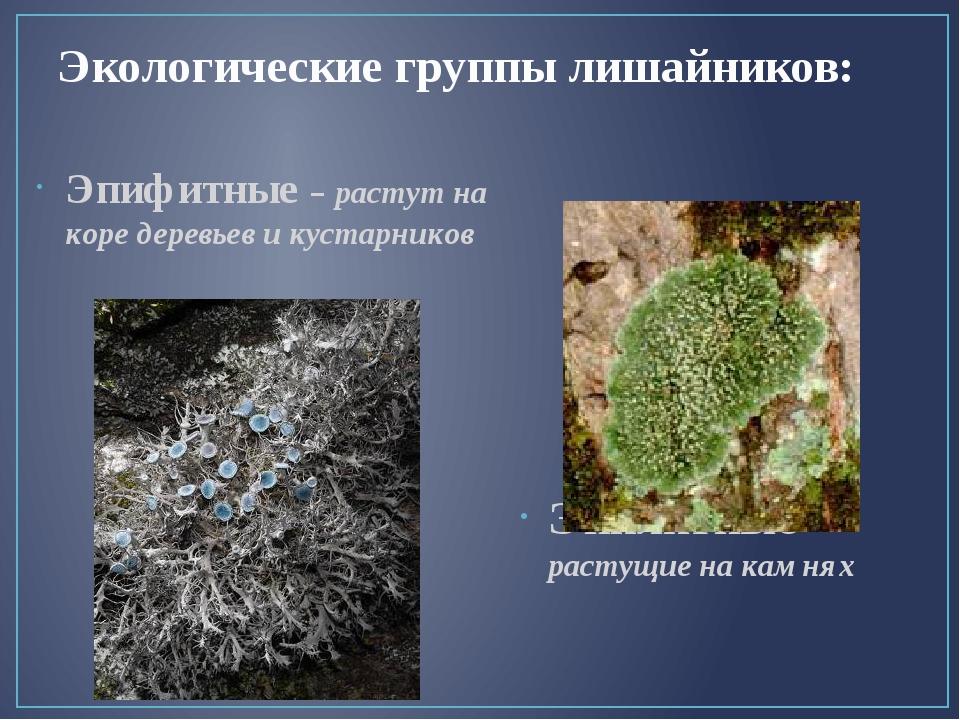 Экологические группы лишайников: Эпифитные – растут на коре деревьев и кустар...