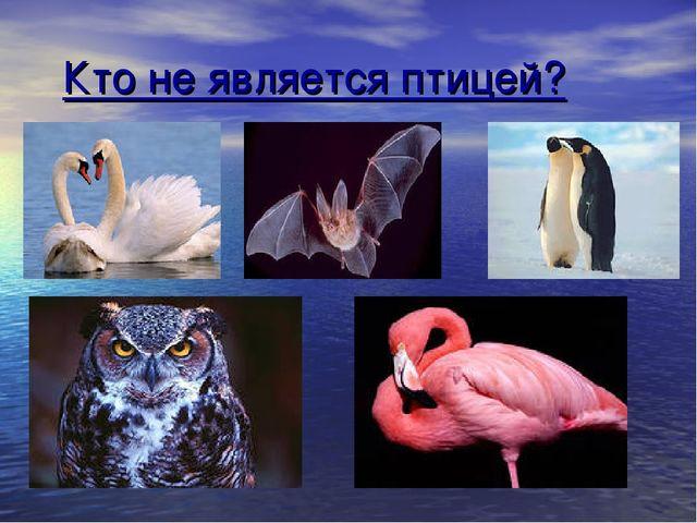 Кто не является птицей?