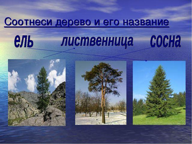 Соотнеси дерево и его название