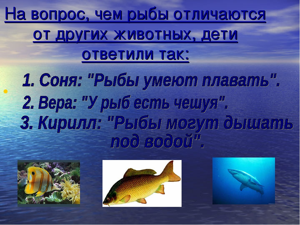 На вопрос, чем рыбы отличаются от других животных, дети ответили так: