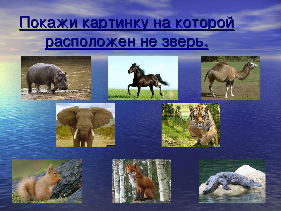 Покажи картинку на которой расположен не зверь.