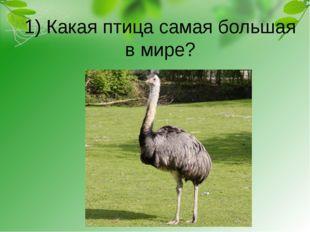 1) Какая птица самая большая в мире?