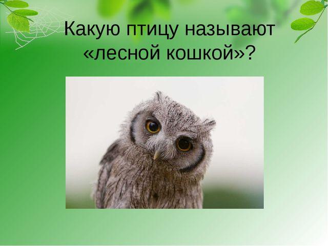 Какую птицу называют «лесной кошкой»?