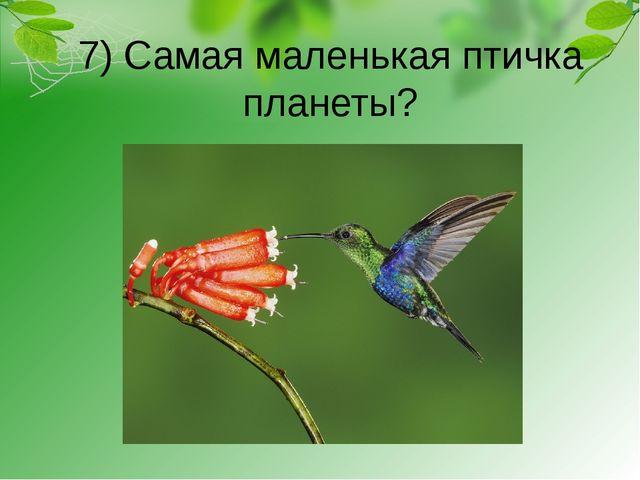 7) Самая маленькая птичка планеты?