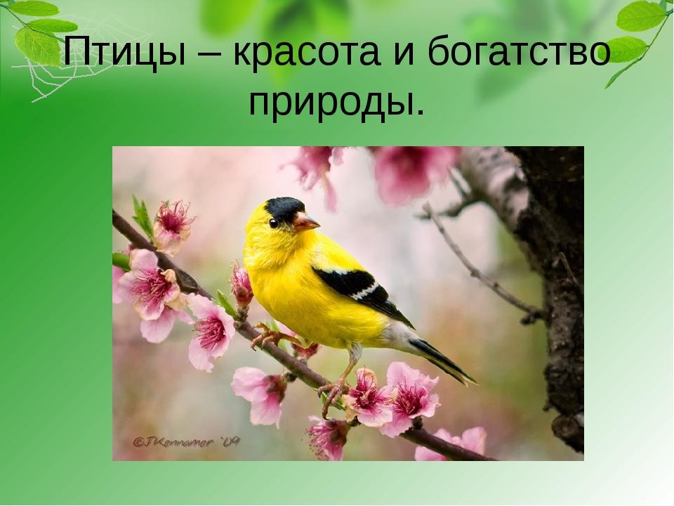 Птицы – красота и богатство природы.