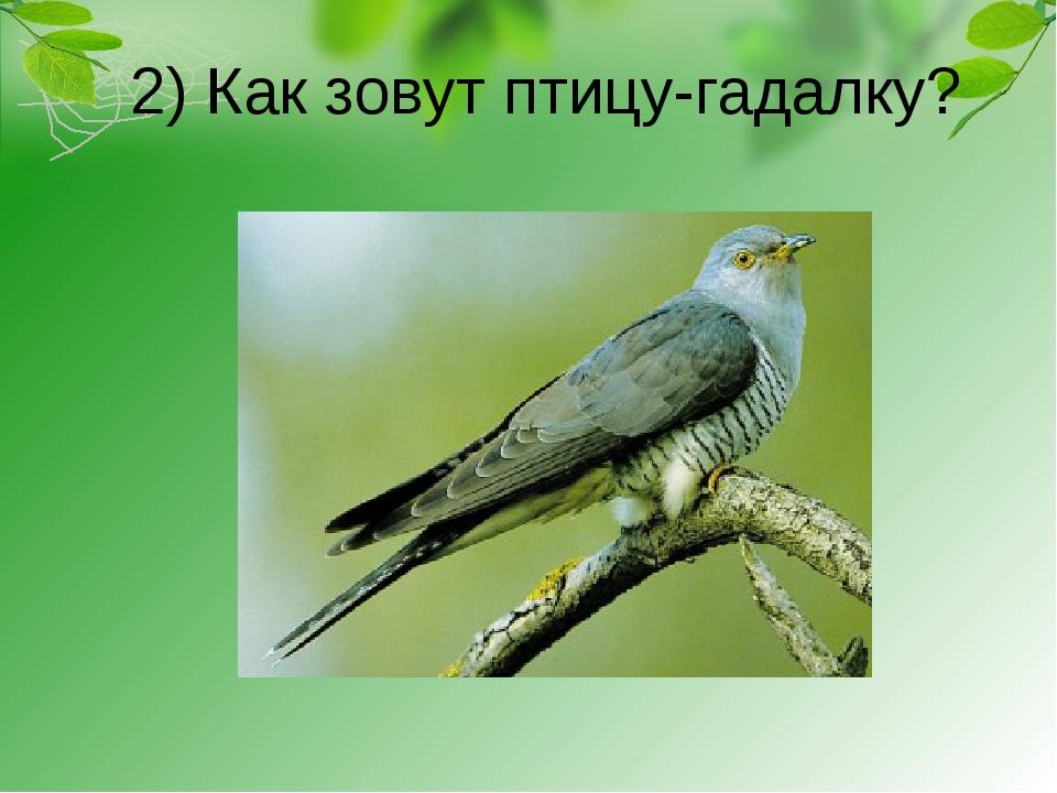 2) Как зовут птицу-гадалку?