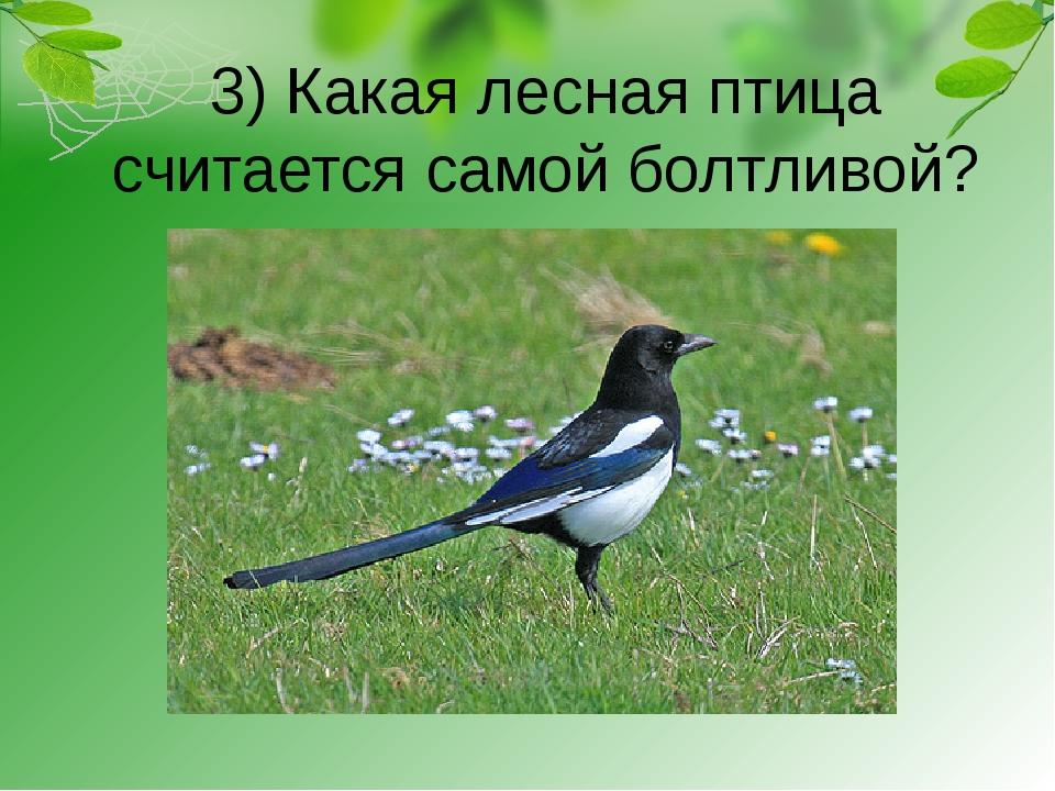 3) Какая лесная птица считается самой болтливой?