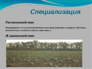 Специализация Растениеводство Выращивание сельскохозяйственных культур (зерн