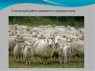 Быковский район занимается овцеводством