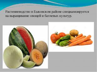 Растениеводство в Быковском районе специализируется на выращивание овощей и б