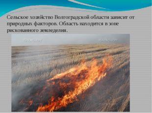 Сельское хозяйство Волгоградской области зависит от природных факторов. Облас