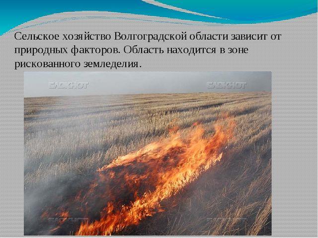 Сельское хозяйство Волгоградской области зависит от природных факторов. Облас...