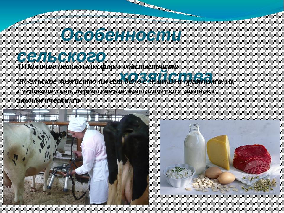 Особенности сельского хозяйства 1)Наличие нескольких форм собственности 2)Се...