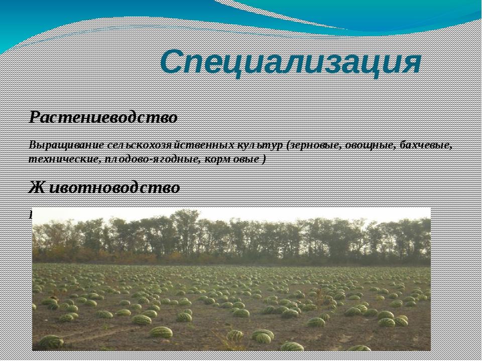 Специализация Растениеводство Выращивание сельскохозяйственных культур (зерн...