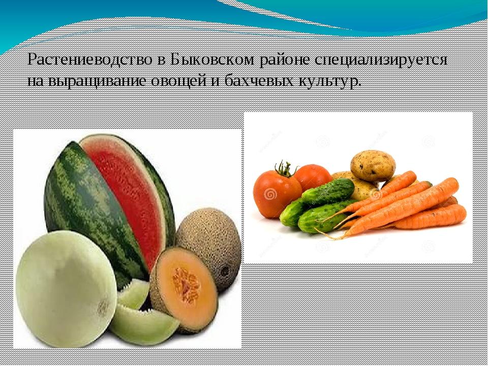 Растениеводство в Быковском районе специализируется на выращивание овощей и б...
