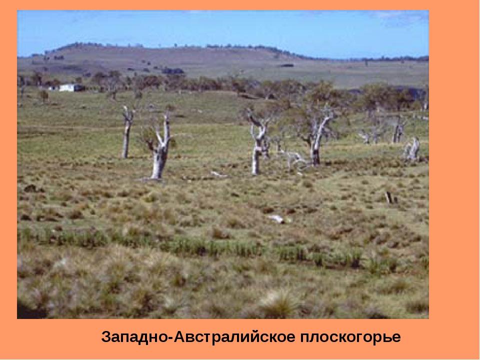 Западно-Австралийское плоскогорье