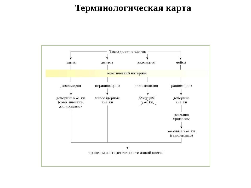 Терминологическая карта