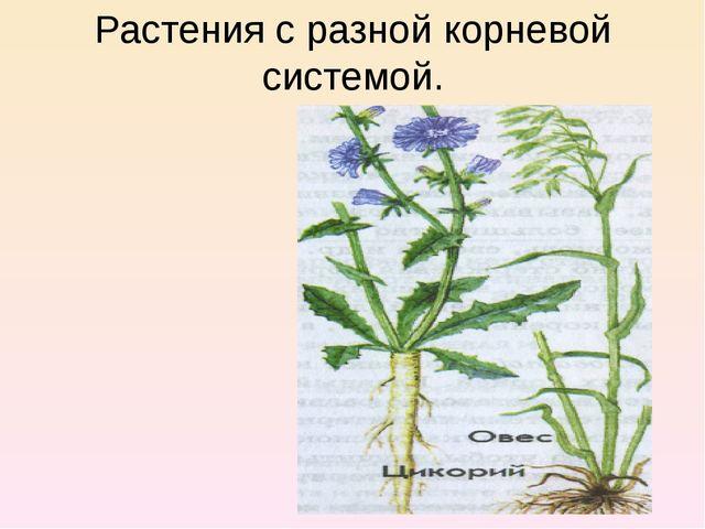 Растения с разной корневой системой.