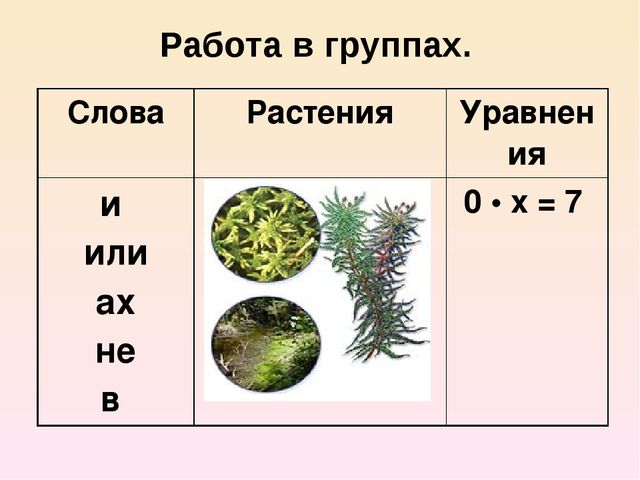 Работа в группах. Слова Растения Уравнения и или ах не в 0•х= 7