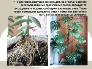 У растений, живущих как орхидеи, на стволах и ветках деревьев влажных тропиче