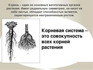 Корень – один из основных вегетативных органов растения. Имеет радиальную сим