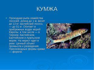 КУМЖА Проходная рыба семейства лососей. Длина до 1 м, весит до 13 кг; каспийс