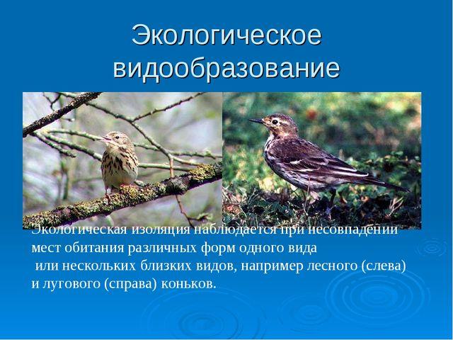 Экологическое видообразование Экологическая изоляция наблюдается при несовпад...