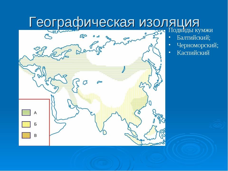 Географическая изоляция Подвиды кумжи Балтийский; Черноморский; Каспийский