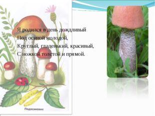 Я родился в день дождливый Под осиной молодой, Круглый, гладенький, красивый,
