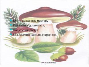 Будто смазанные маслом, Как лесные дошколята, Под сосной растут… Мы блестим н