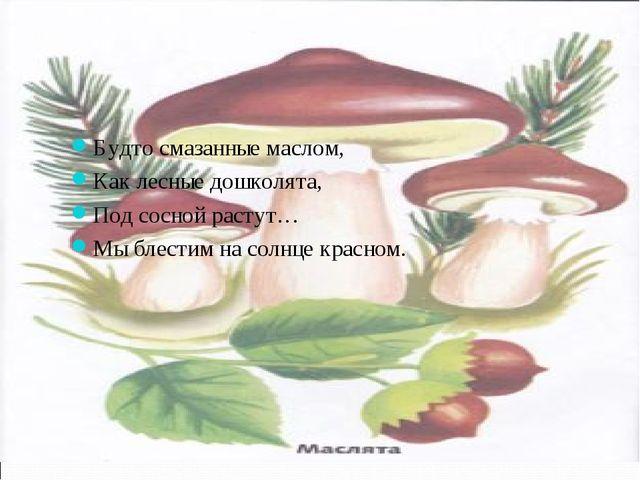 Будто смазанные маслом, Как лесные дошколята, Под сосной растут… Мы блестим н...