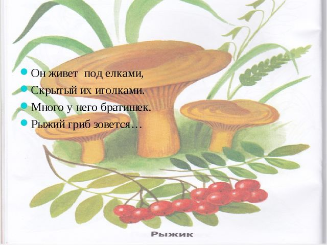 Он живет под елками, Скрытый их иголками. Много у него братишек. Рыжий гриб з...