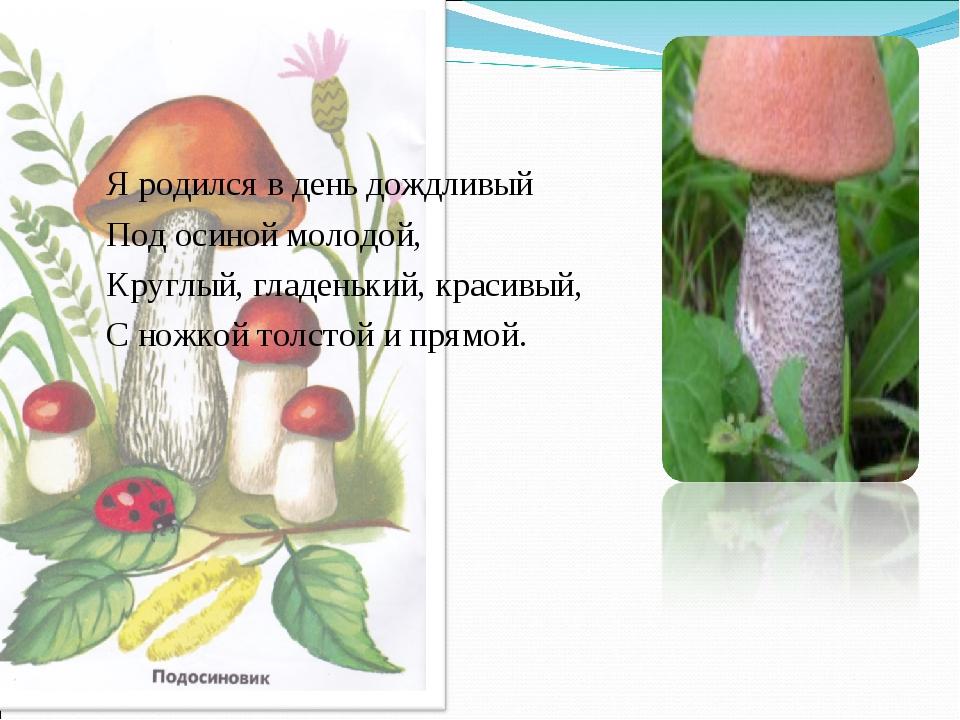 Я родился в день дождливый Под осиной молодой, Круглый, гладенький, красивый,...