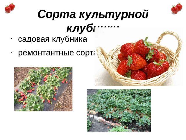 Сорта культурной клубники садовая клубника ремонтантные сорта.