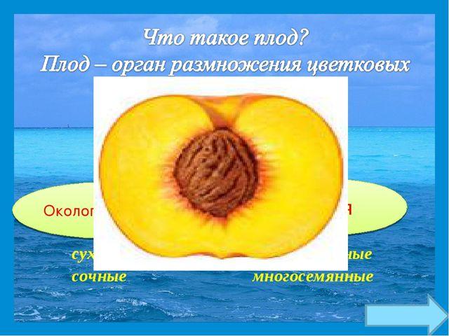 сухие односемянные сочные многосемянные плод Околоплодник семя
