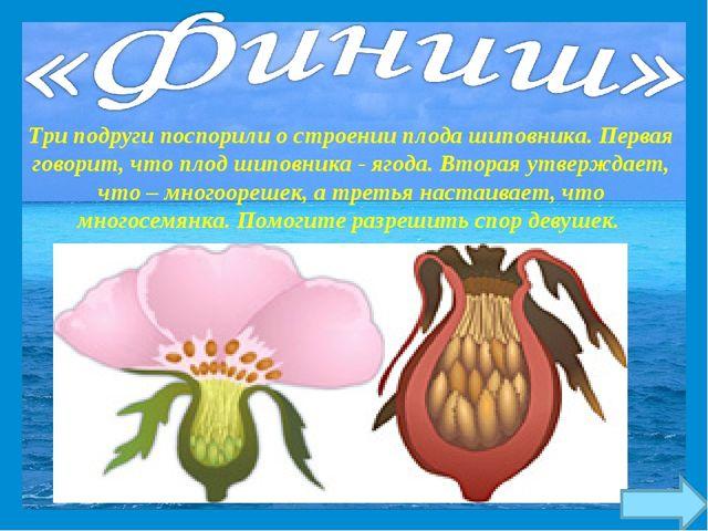 Три подруги поспорили о строении плода шиповника. Первая говорит, что плод ши...