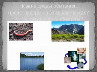 Какие среды обитания представлены на этих картинках? А что такое среда обитан