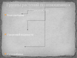 Влаголюбивые Умеренной влажности Сухолюбивые Группы растений по отношению к в