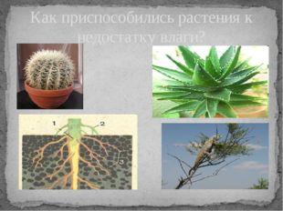 Как приспособились растения к недостатку влаги? Записать приспособления расте
