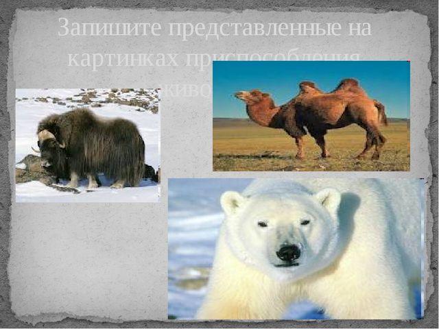 Запишите представленные на картинках приспособления животных.