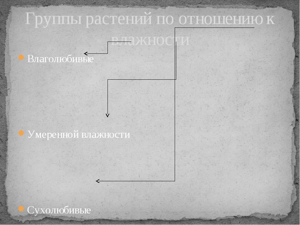 Влаголюбивые Умеренной влажности Сухолюбивые Группы растений по отношению к в...