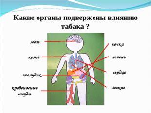 Какие органы подвержены влиянию табака ? мозг кожа желудок кровеносные сосуды
